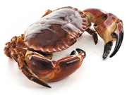 Ireland's Organic Shellfish Supplier